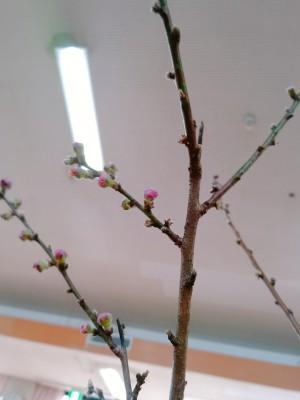 20-03-03-15-39-44-863_deco